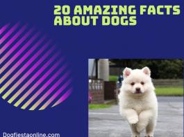 amazing dog facts