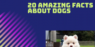 amazing dog facts