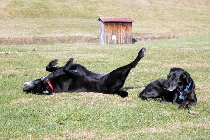 dog on grass
