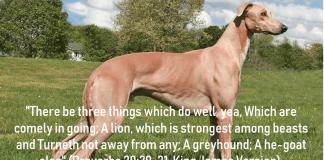 grey hound bible verse
